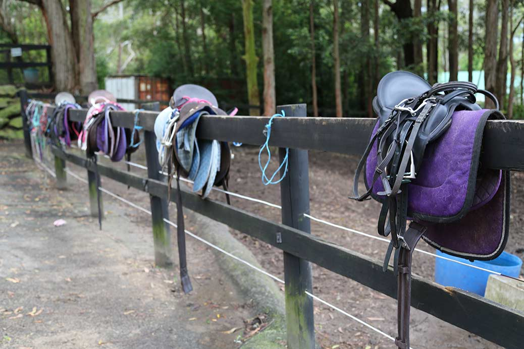 Saddles along the fence in preparation for a ride.
