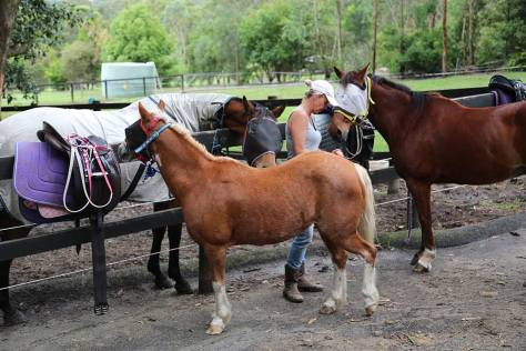 Sandie is brushing the ponies and horses in preparation for a ride. Mini is in the foreground, with Ace to the right.
