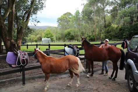 Sandie grooming the horses before a ride.
