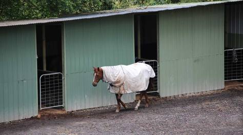 An agistee chestnut in front of stables at HorsePower Riding Academy (HPRA)