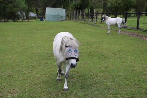 Rocky and Snowy are two HPRA white pony pals who like to share a paddock.