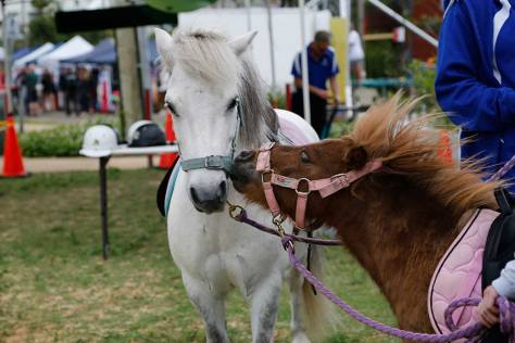 Ponies kissing while waiting to take children for rides at the Oyster Festival at Ettalong in November 2015.