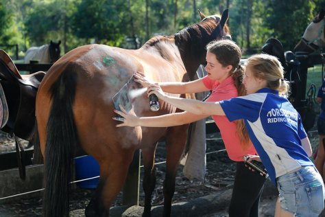 Two of the girls use a 'Ho' stencil with colour hair spray to paint 'Ho ho ho' on a bay horse.