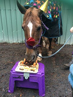 Party-hatted Roxy enjoying his carroty birthday cake.