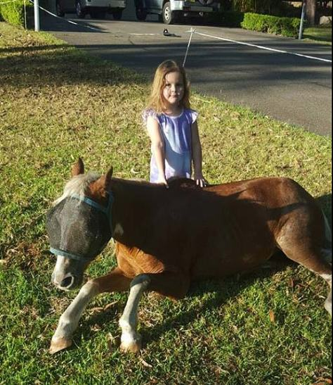 Mini and Chloe at HPRA
