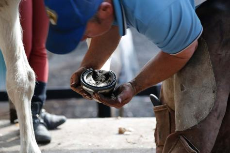Shannon frequently examines his work to ensure best fit of each shoe for each horse's needs.