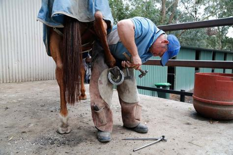 Shannon uses a mallet and a buffer to separate the old shoe from the hoof.