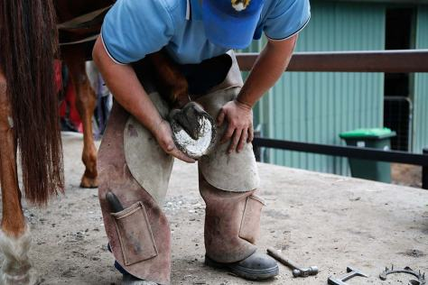 Shannon examines the horse's hoof to decide how much hoof to trim and how best to shape the new shoe for this hoof.