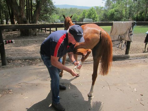Ken manipulating the  hind leg of a horse