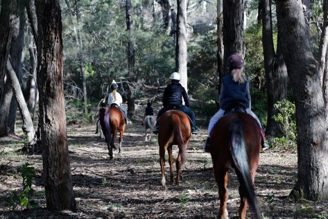 Heading home through the bush after a day's riding